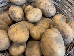 Aardappelen 'nieuwe oogst'