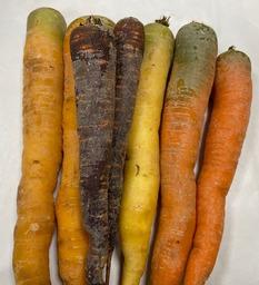 wortels wit / geel /rood