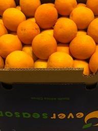 Perssinaasappelen (kist)