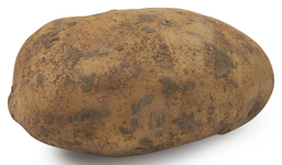 Aardappel nicola