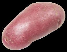 Aardappel roseval