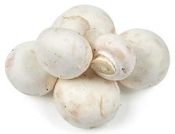 Witte Champignons