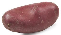 Aardappel Menopper 2,5 kilo
