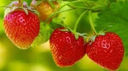 Aardbeien 250 Gram
