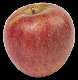 Appel cox