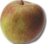 Moesappel