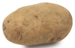 Aardappel Eigenheimer Bloemig Bio