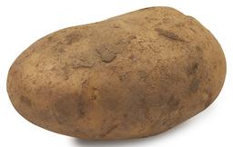 Aardappel Frieslander Bio