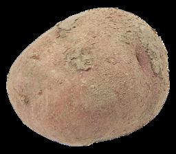 Aardappel Bildstar Bio