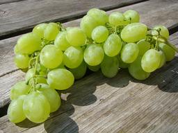 Druiven pitloos