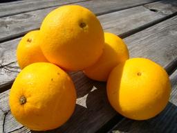 Hand sinaasappel kl.
