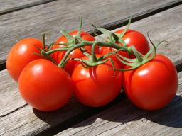 Tomaten tros