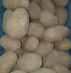 Patataardappelen