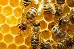 Bijenhoning