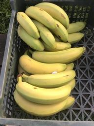 Biologische Bananen